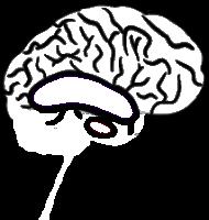 brains_wit